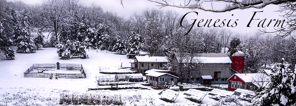 Header_winter